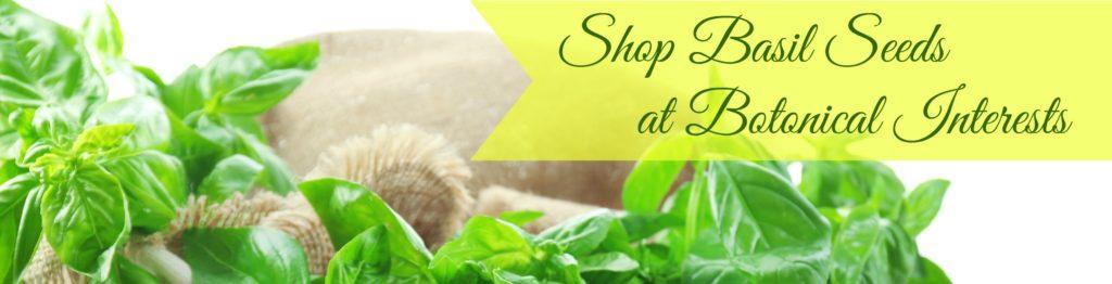 Shop Basil Seeds at Botanical Interests