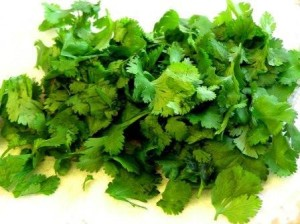 Fresh Bunch of Cilantro