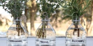 Herb Garden Ideas - Supermarket Herbs in Water