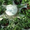 Hydroponic Herb Gardens - Grow Fresh Herbs Super Fast!