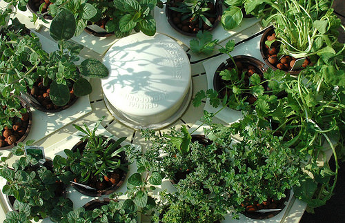 Hydroponic Herb Garden Systems and Super Cool Kits