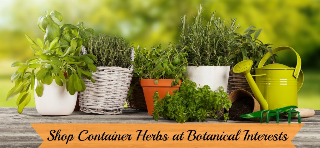 Shop Container Herbs at Botanical Interests