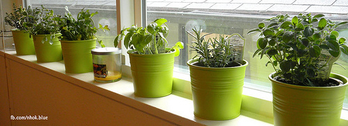Easy Kitchen Herb Garden Ideas To Grow Culinary Herbs