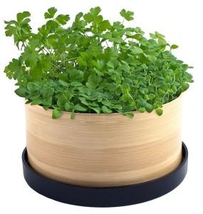 10 Easy Kitchen Herb Garden Ideas To Grow Culinary Herbs