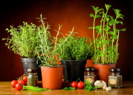 Fresh Culinary Herbs for your Kitchen Herb Garden