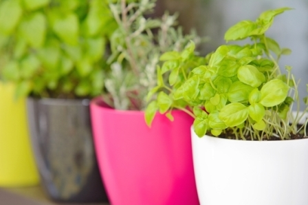 Design A Container Herb Garden With Shapes Sizes And Colors