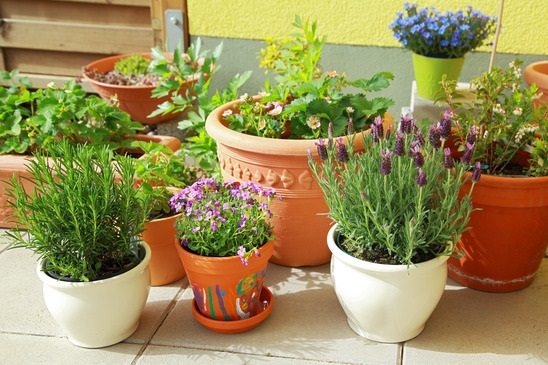 herbs and flowers in pots