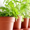 10 Tips for a Successful Indoor Herb Garden