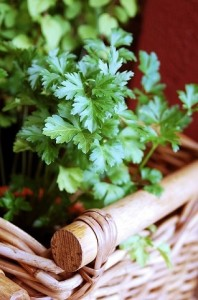 fres parsley in basket