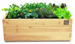 Design Idea A Mobile Herb Garden