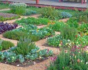 fun garden patterns - Gardening Design Ideas