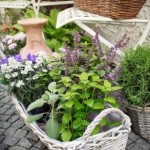 Small Herb Garden Design - small herb pots in baskets with flowers