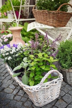 Exceptional Small Herb Garden Design   Small Herb Pots In Baskets With Flowers