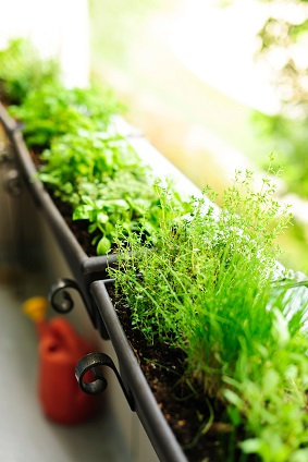 Kitchen Herbs on Balcony