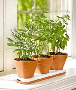 How to Make a Windowsill Herb Garden & Grow Culinary Herbs