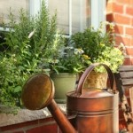Windowsill Herb Garden in Pots
