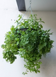 self watering hanging baskets