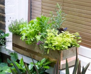A DIY Herb & Vegetable Window Box