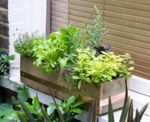 A Diy Herb Vegetable Window Box