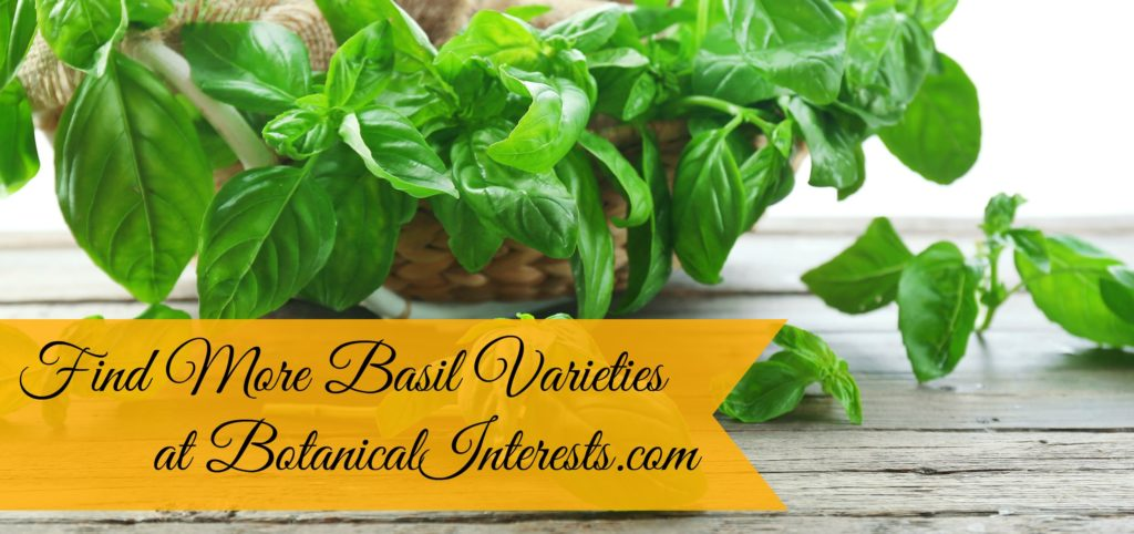 Shop more basil varities