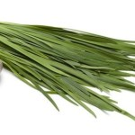 Garlic Chives: A Flat Leafed Chive with a Distinct Garlic Flavor