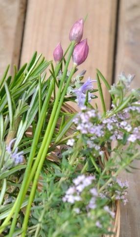 flowering perennial herbs