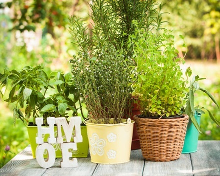 how to grow culinary herbs in the home herb garden an easy guide. Black Bedroom Furniture Sets. Home Design Ideas
