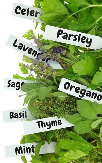 types of culinary herbs