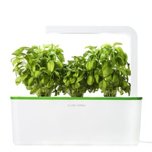 Basil indoor herb garden