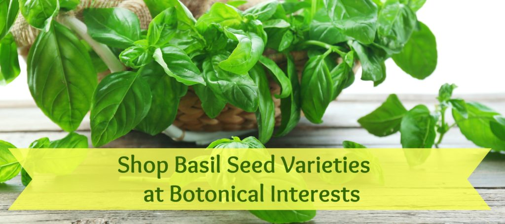 Shop Basil Seed Varieties