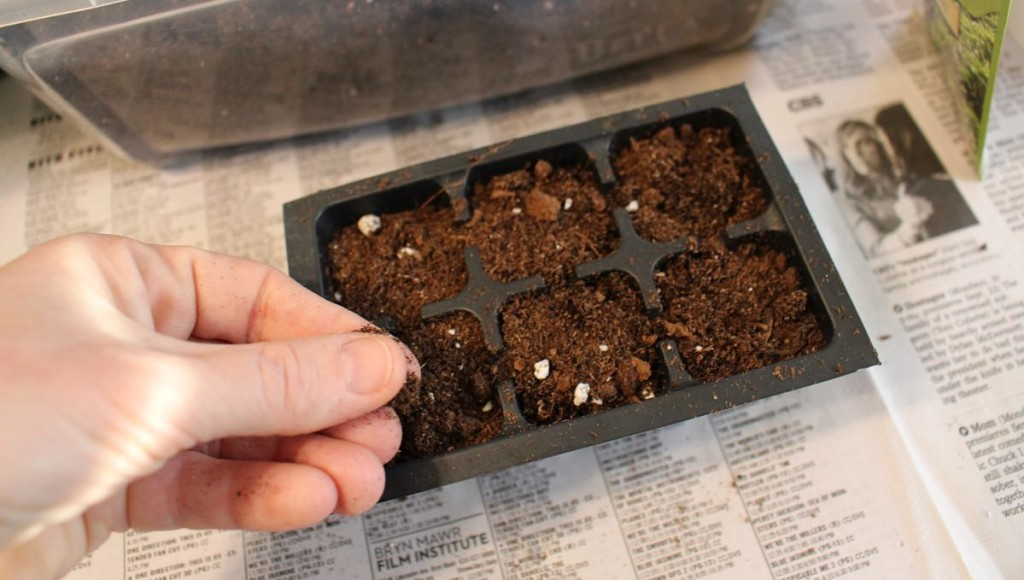 Planting Basil Seeds In Pots