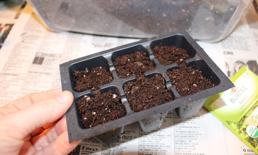 fill seedling pots with soil