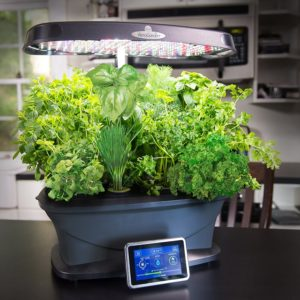 Herbs growing in the AeroGarden