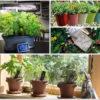 7 Fun Gardening Gift Ideas