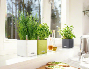 Self Watering Mini Cubes Lechuza Cube Herb Planter