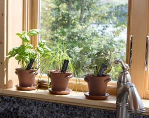 Set of three rustic garden pots with herbs on window ledge