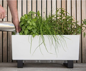Self Watering Planters White Mini Deck Planter Filled With Herbs