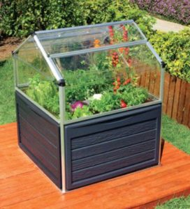 herbs and vegetables growing in a mini raised greenhouse