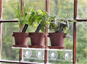 herb garden on a ledge attached to the window with suction cups