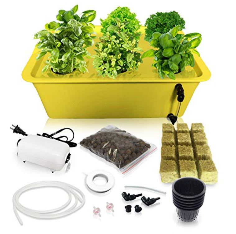 Six herbs growing; showing all materials included in the kit