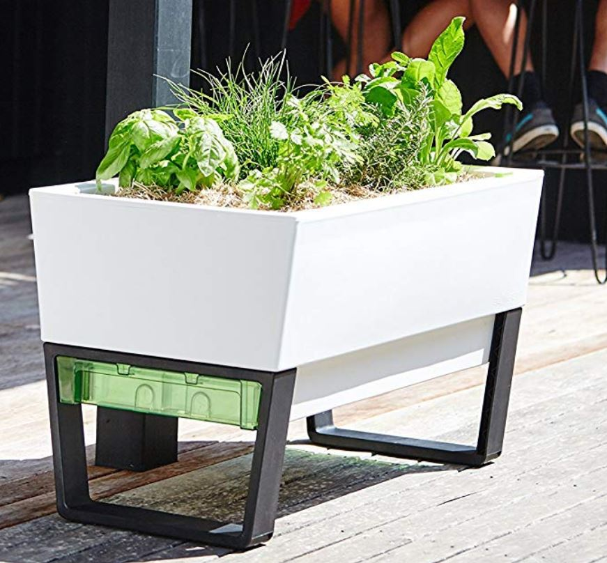 white rectangular planter wirh basil, chives rosemary and other herbs growing inside