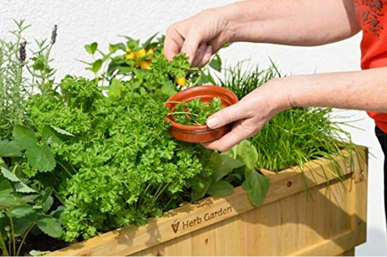 Ordinaire How To Grow Culinary Herbs In The Home Herb Garden