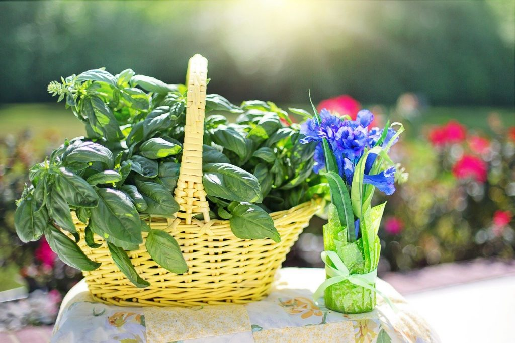a basket filled with freshly picked basil leaves on a table outside