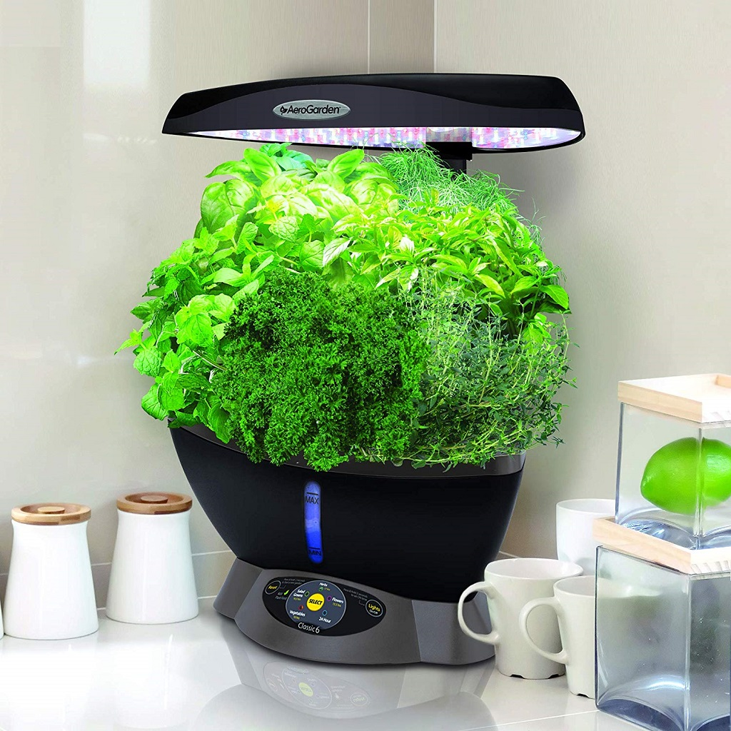 The AeroGarden Classic 6 growing herbs on the countertop