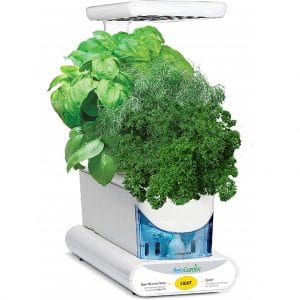 AeroGarden Sprout with parsley, dill and basil