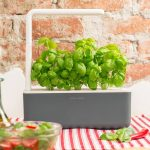 Our Click and Grow Review: Just How Smart Is This Herb Garden?