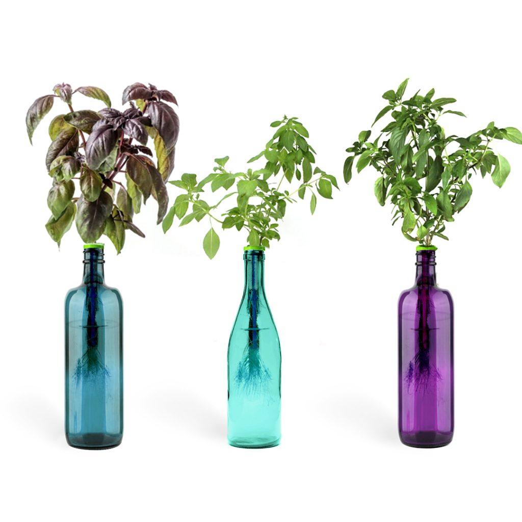 basil in colorful bottles