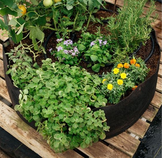 large smart pot growing vegetables and herbs