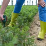 The Best Soil Moisture Meters To Ensure the Health of Your Plants