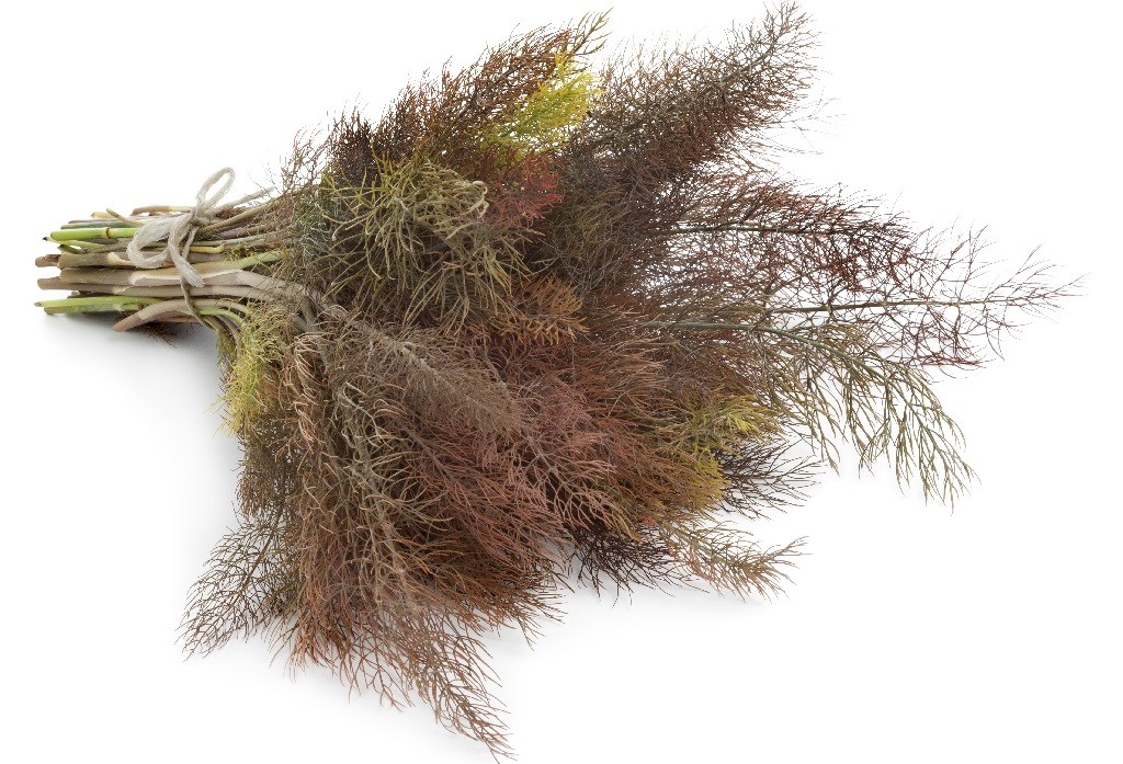 Bundle of bronze fennel